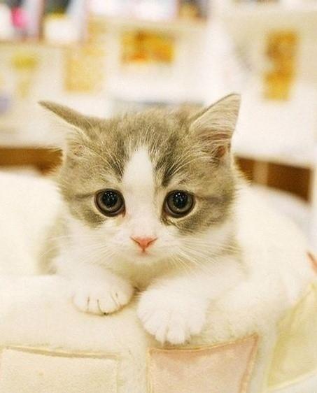 壁纸 动物 猫 猫咪 小猫 桌面 453_562 竖版 竖屏 手机